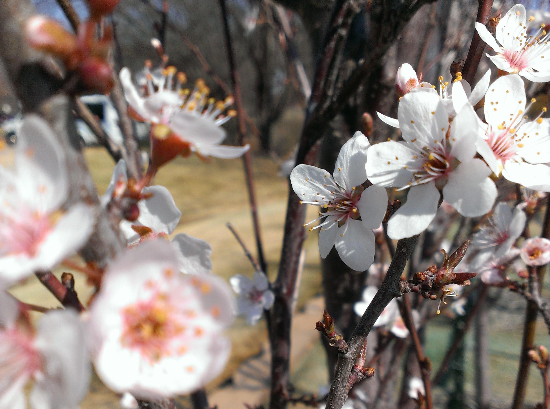Tree Species Highlight Edmond Ok Official Website